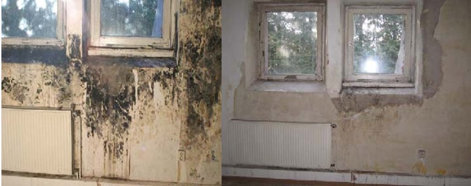 Indoor Mould